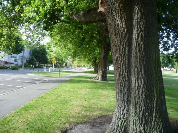 Trees Left