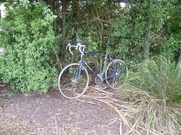 Bike in the Bushes