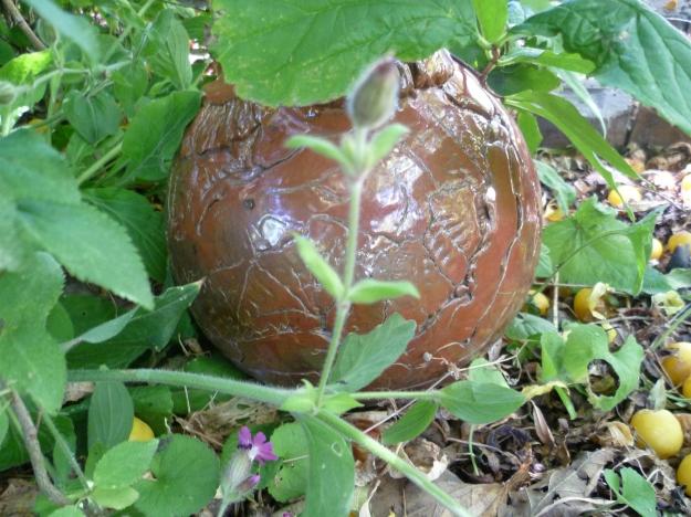 Pot amongst the Herbs