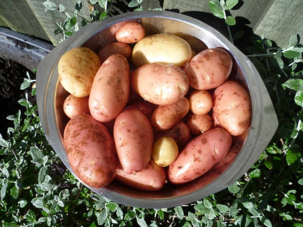 Spuds pure and simple