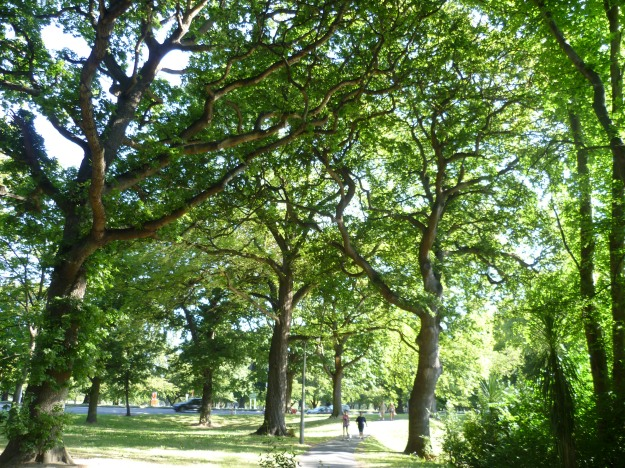 Little Hagley Park