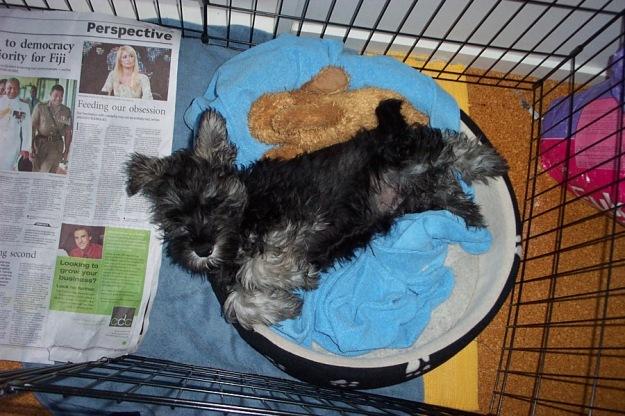 Tiring puppy days