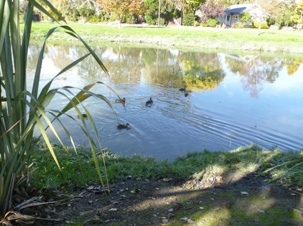 Heathcote River Reflections