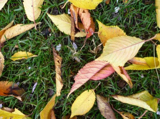 Looks like Autumn
