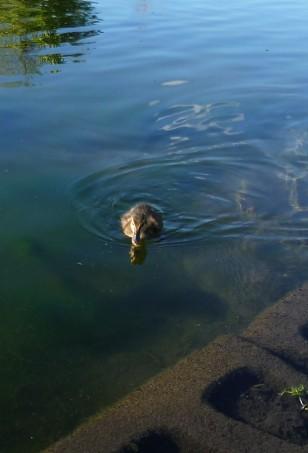Watch me swim, Mum.
