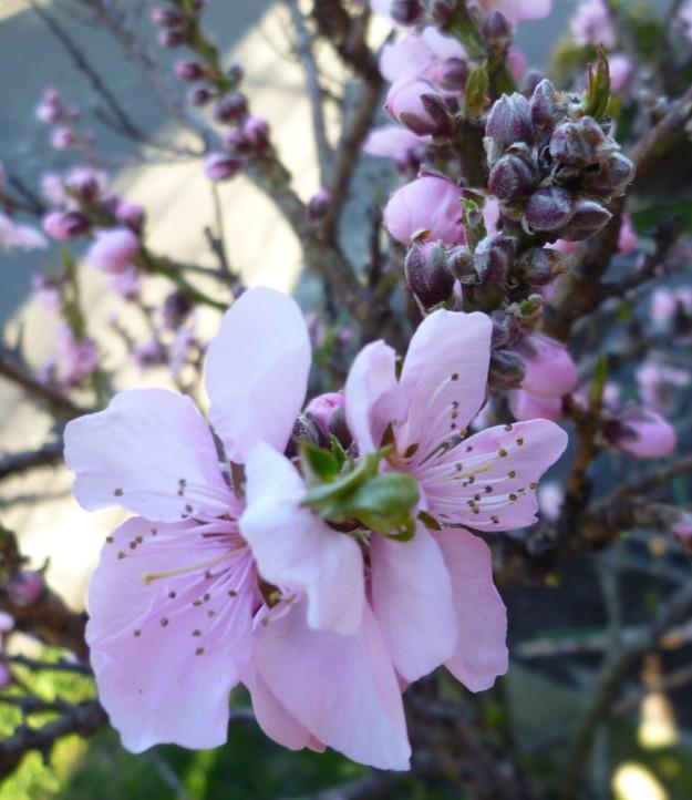 Bountiful Blossom