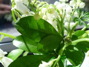 in a sweet bouquet