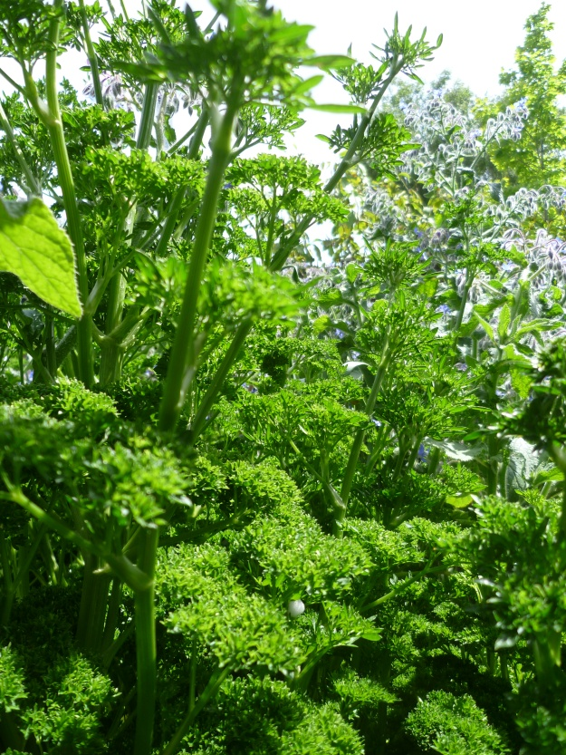 Parsley Paradise