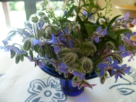 Blue Borage and Para Hebe