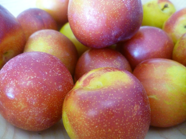 Plums, pretty and perfect