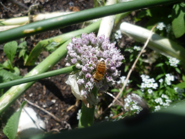 Bee with leek