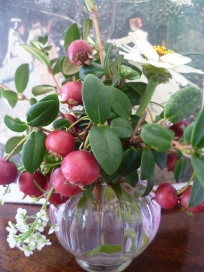 Chilean Guava and Alyssum