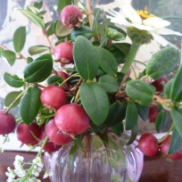 Chilean Guava and Alyssum