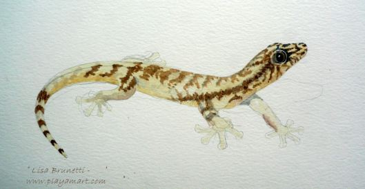 Lisa's Gecko (Watercolour in Progress)