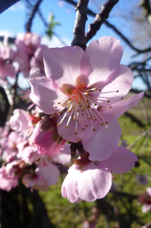 Spring unfurled