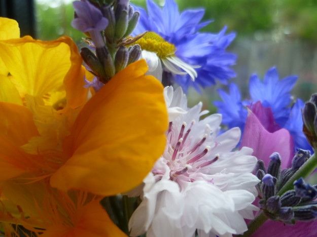 Cornflowers, lavender and nasturtium for the kitchen