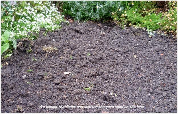 International Soil Day 21 January 2015