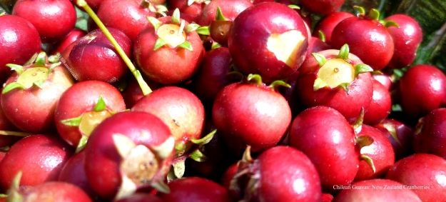 Chilean Guavas: New Zealand Cranberries